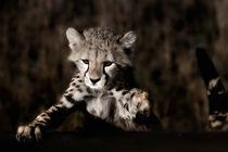 Cheetah cub, Masai Mara von Maggy Meyer