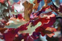 Herbstlaub von Jens Berger