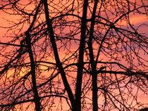 perfektes farbenspiel beim sonnenuntergang 5 by elfriede zitas