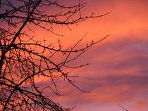 perfektes farbenspiel beim sonnenuntergang 4 by elfriede zitas