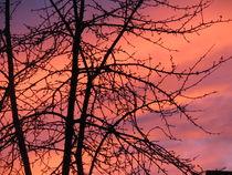 perfektes farbenspiel beim sonnenuntergang 3 by elfriede zitas