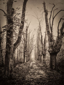 The avenue to Avalon! von Stefan Kierek