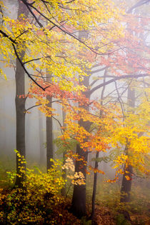Fall and Fog von David Pinzer