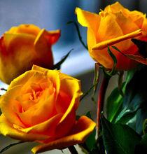 Roses on Bithday by Maks Erlikh