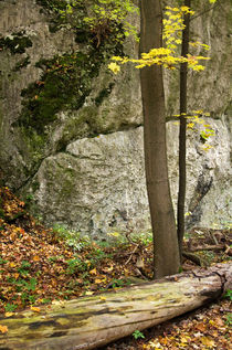 Tree and rock by photogatar