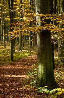 Autumn road by photogatar