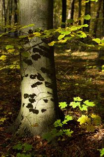 Shadows of leaves von photogatar