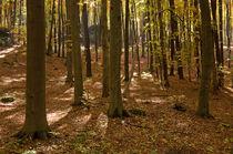 Beech forest von photogatar