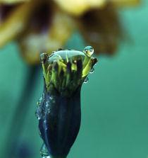 flower rain by emanuele molinari
