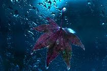 red wet leaf von emanuele molinari