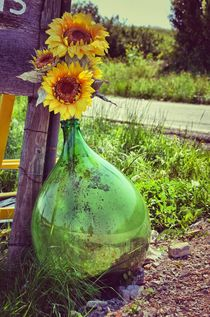Sonnenblume by retina-photo