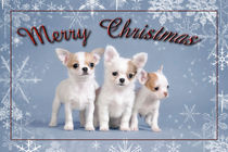 Chihuahua Christmas card by Waldek Dabrowski