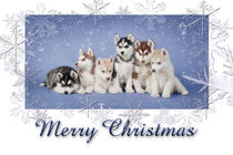 Husky Christmas card  by Waldek Dabrowski
