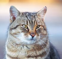 Fat Cat von Tobiasz Stefaniak