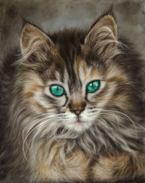 Maine Coon Cat by Tobiasz Stefaniak