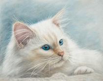 Neva Masquerade Cat by Tobiasz Stefaniak