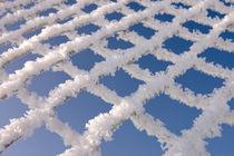 Frost on fence by Tobiasz Stefaniak