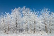 Winter Frost von Tobiasz Stefaniak