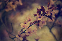 Memories of spring by Sarah C. Frerich