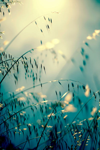 Spring-dreaming-edited-img-4664