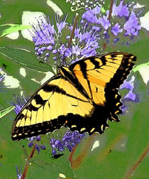 Tiger Butterfly by Kathleen Stephens