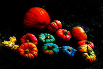 Squash in Colors by Kathleen Stephens