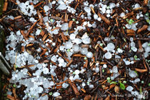 Hail Stones & Wood Chipping by sisterofdarkness