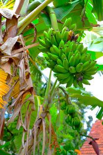Grüne Bananen von Gina Koch