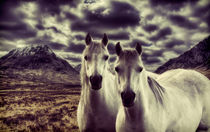 White Stallions by Sam Smith