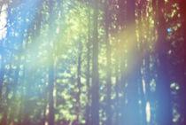 Bliss by Lauren Wuornos