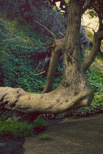 Sleeping Giant by Lauren Wuornos