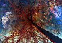 baum perspektive  by Katharina Kabara