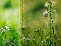 Kwiaty von Katharina Kabara