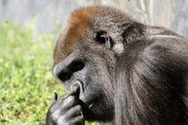 Gorilla I by Tina Rodriguez