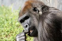 Gorilla III by Tina Rodriguez