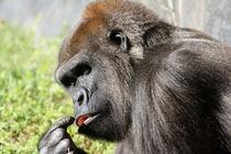 Gorilla II by Tina Rodriguez