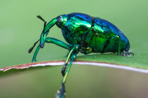shiny metallic bug von Craig Lapsley
