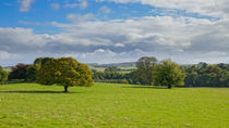 Green and pleasant land. by Mark Aynsley
