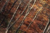 Magic autumn von Jutta Ehrlich