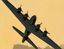 Sally B by Nigel  Bangert