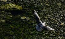 Seagull- Nice, Côte d'Azur, France by Alicja Bzdak