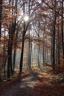 Herbst  by Pia Schaper