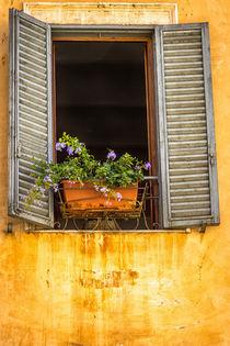 Am Fenster von gfischer