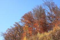 Herbstwald von Jutta Ehrlich