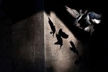 pigeon air tango von Jessy Libik
