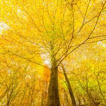 Herbstliche Baumkrone, gelb-orange von Thomas Joekel
