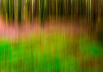 Grüne märchenhafte Lichtung von Thomas Joekel