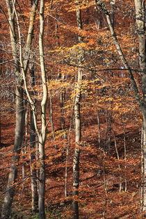 Autumn colors von Jutta Ehrlich