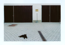 I want my cat back! von Viktoria Morgenstern