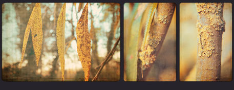 Willow-triptych-c-sybillesterk
